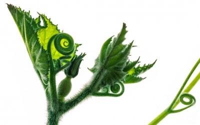 Verde Creativo – Creative Gardening | Mondadori
